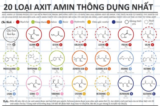Axit amin liên kết với nguyên tố vi lượng cung cấp các chất cho bộ phận cây