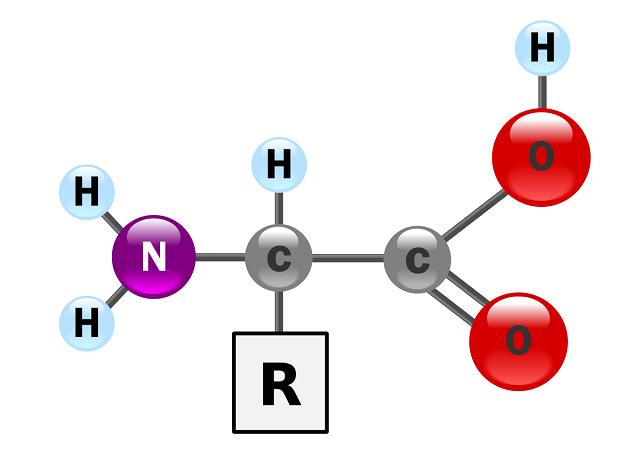 Axit amin đóng vai trò quan trọng và chiếm số lượng thứ hai trong phân tử protein