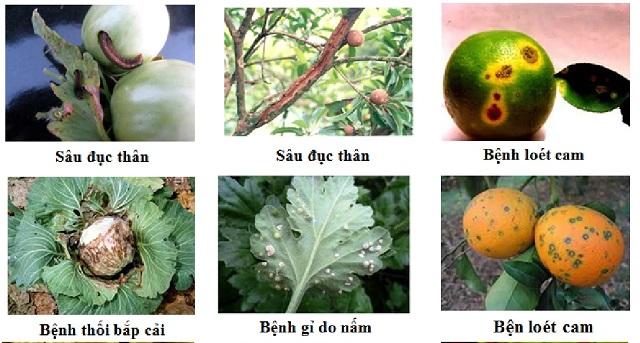 Bổ sung chế phẩm amino acid khi cây trồng gặp các điều kiện bất lợi