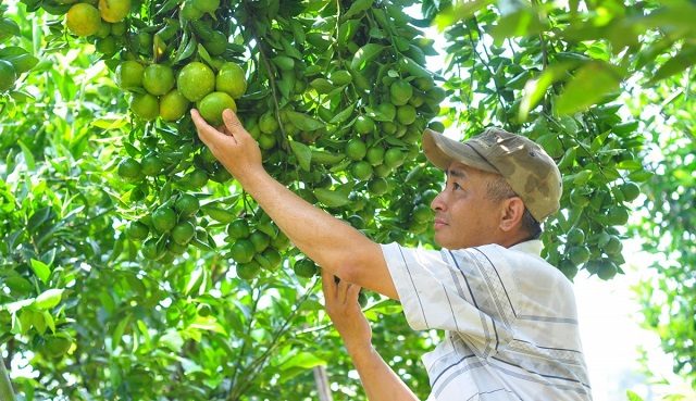 Cây trồng khỏe mạnh, tươi tốt nhờ được cung cấp amino acid đầy đủ