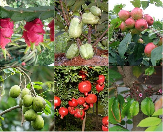 Mọi cây trồng không thể thiếu thành phần Amino acid hữu cơ
