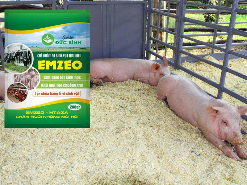 Cách làm đệm lót sinh học chăn nuôi heo rất đơn giản với men vi sinh EMZEO