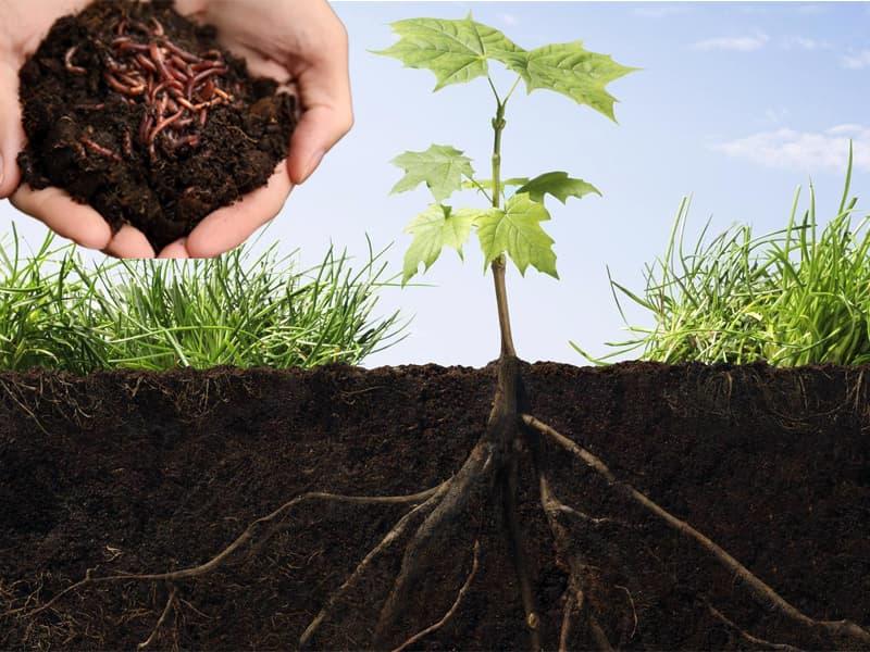 Cách bón thúc cho cây trồng hiệu quả nhất