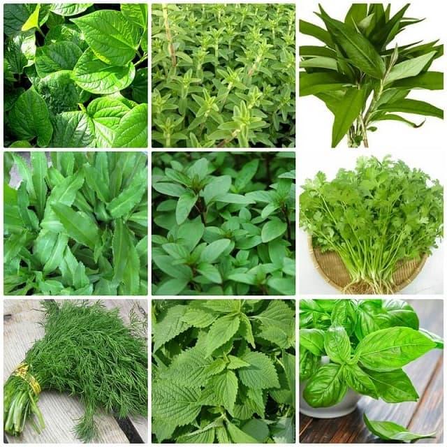 Các loại rau thơm dễ trồng